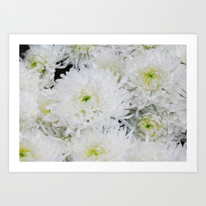 White chrysanthemum flowering herb art print by lamphotography white chrysanthemum flowering herb art print mightylinksfo