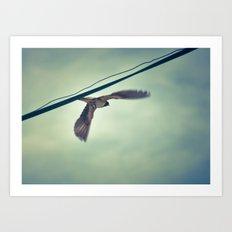 chasing swallows Art Print