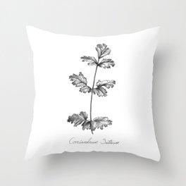 Cilantro Botanical Illustration Throw Pillow