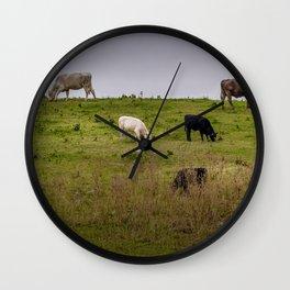 Irish Cattle grazing  Wall Clock