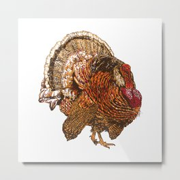 Turkey (Color) Metal Print