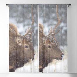 Watercolor Elk Bull 55, Chilly Blackout Curtain