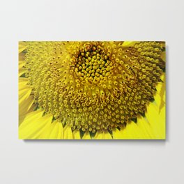 Nature Close-up - Mind-blowing mathematics in a sunflower Metal Print