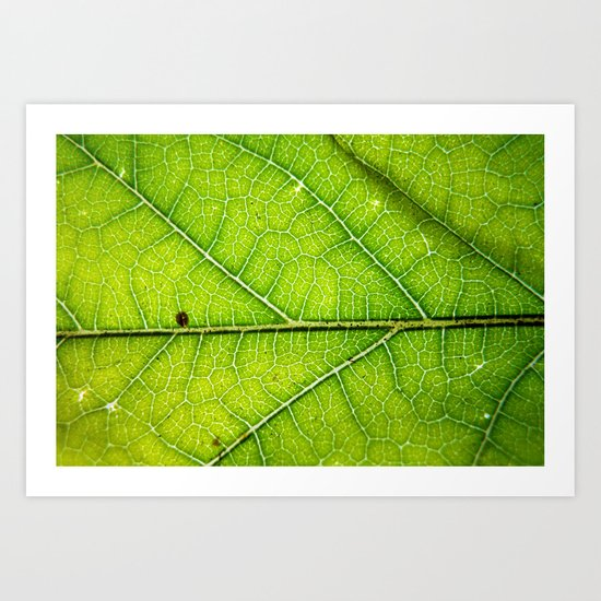 Macro Leaf no 9 Art Print