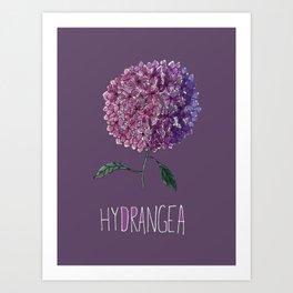 Hyrdangea Art Print