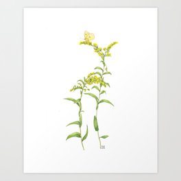 Yellow Goldenrod with Butterfly Art Print