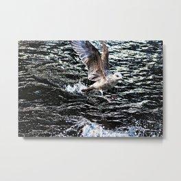 Seagull Bird Takeoff Sea Water Metal Print