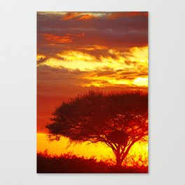 Glowing African Morning Canvas Print