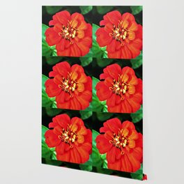 The Red Zinnia Wallpaper