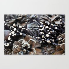 Pinecones Canvas Print