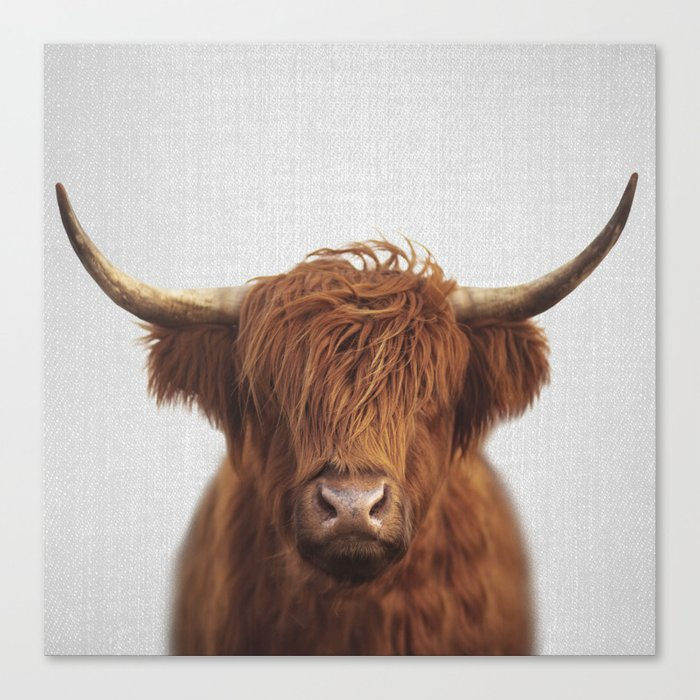 Highland Cow - Colorful Canvas Print