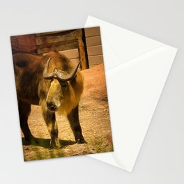 Takin Stationery Cards