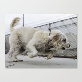 Fernie dog Canvas Print