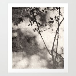 Leaves and Branches Shadows on Stone Wall Art Print