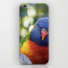 Peeking Lorikeet iPhone & iPod Skin