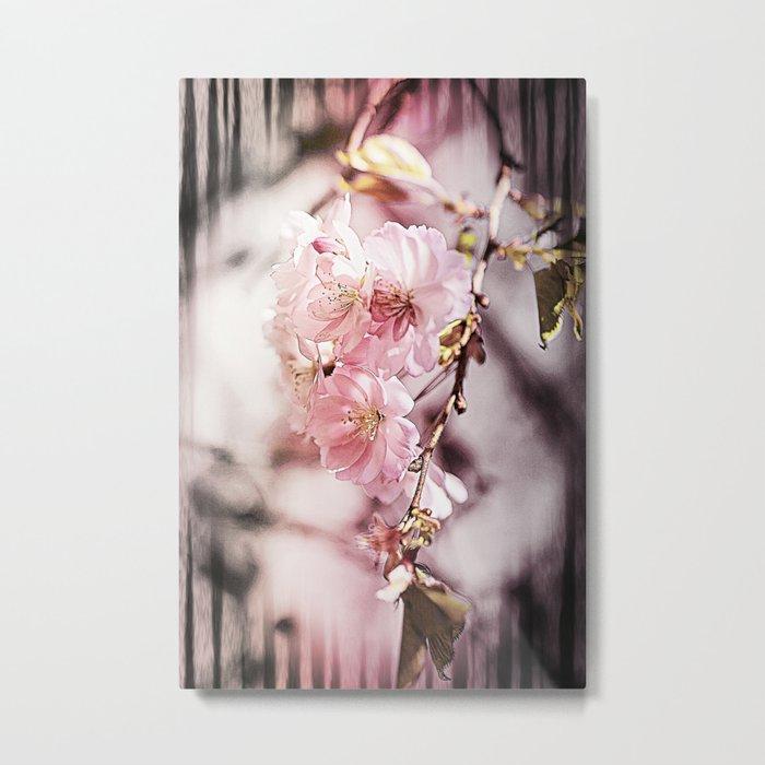 Zebra Cherry Blossom Metal Print