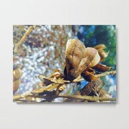 Seed pod of a Yucca plant Metal Print