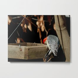 Lunchtime Metal Print