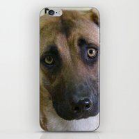 the hound iPhone & iPod Skins featuring Hound Pup by IowaShots