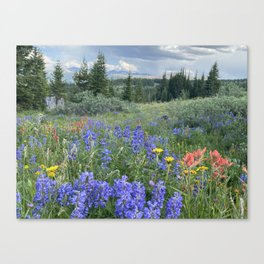 Wildflower Natural Garden above Vail Pass, Colorado Canvas Print