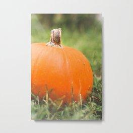 bright little pumpkin Metal Print