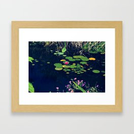 lily in the pond Framed Art Print