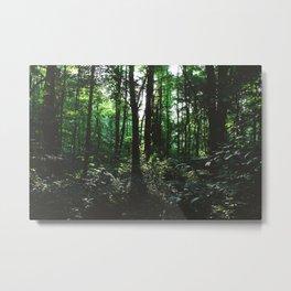 Forest Trail XXIV Metal Print
