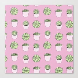 pink suculents in flowerpots Canvas Print
