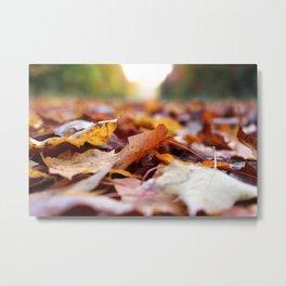 Focusing on Fall: 2 Metal Print