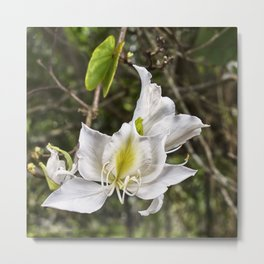 Beautiful butterfly tree bloom Metal Print