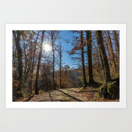 A beautiful day in the woods Art Print