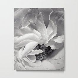 rose petals in black and white Metal Print