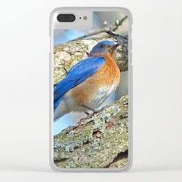 Bluebird in Tree Clear iPhone Case