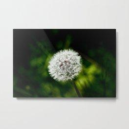 Dandelion 01 Metal Print