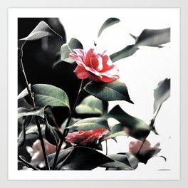 Camillia #13 Art Print