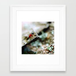 Ant Insect Photography, Nature, Macro, Home Decor Framed Art Print