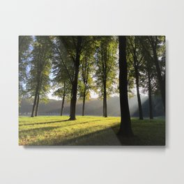 Light-flooded forest Metal Print