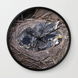 Baby robins in nest (fledglings) Wall Clock