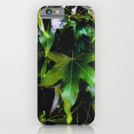 closeup tree with green leaves texture background iPhone Case