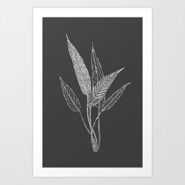 Black and White Botanical Drawing Art Print