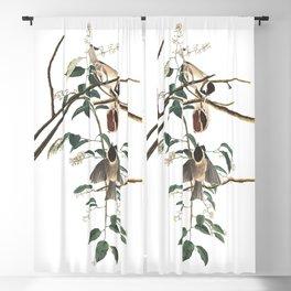 Carolina titmouse working, Birds of America, Audubon Plate 160 Blackout Curtain