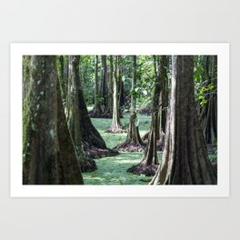 Bornean Rainforest Art Print