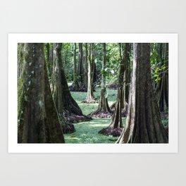Bornean Rainforest Art Print