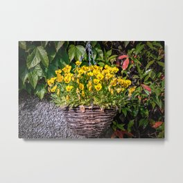 Yellow Pansies In a Hanging Baskets Metal Print