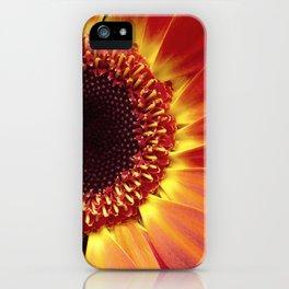 Harvest Sunflower iPhone Case