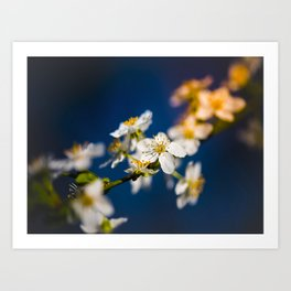 Beautiful White Jasmine Flowers With Green Leaves Against A Blue Background Art Print