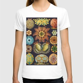 Ernst Haeckel Sea Squirts Ascidiae T-shirt