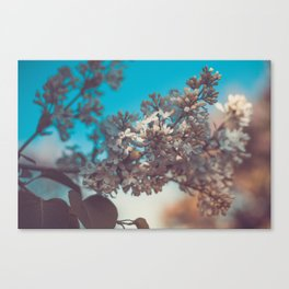 still life with a flowering branch of lilac. spring vintage background. selective soft focus Canvas Print