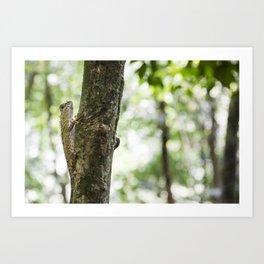 Borneo Anglehead Lizard Art Print