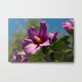 """Imagine"" - Hibiscus Flower Metal Print"